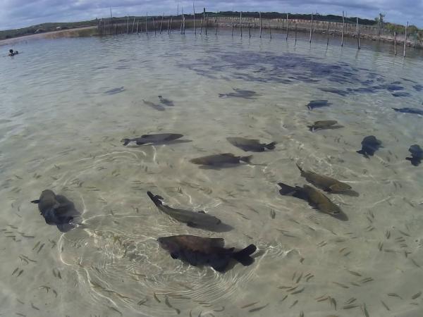 Boato de Esquistossomose na Lagoa dos Tambaquis causa preocupação