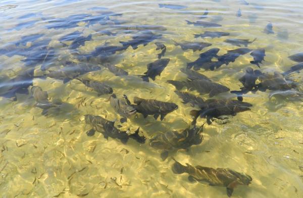 Mais de 20 mil peixes foram introduzidos no local no anos 90 — Foto: Eduardo Lacerda