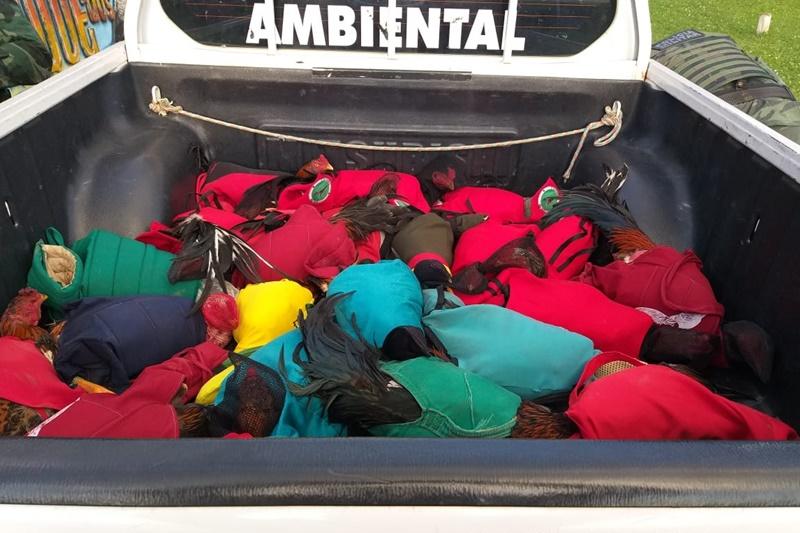 Pelotão Ambiental desarticula rinha de galo no município de Itaporanga D'Ajuda